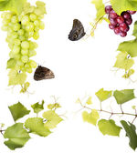 Fresh grape with Leaves — Stock Photo