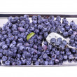 Fresh Bilberries. Close-up background — Stock Photo #29055881