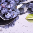 Stock Photo: Fresh Bilberries. Close-up background