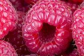 Fresh red raspberries background — Stock Photo