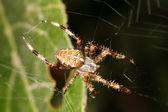 Spider on web — Stock Photo