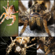 Scary Spider collage — Stock Photo #32018757