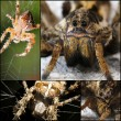 Scary Spider collage — Stock Photo