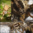 Scary Spider collage — Stock Photo #32019275