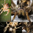 Scary Spider collage — Stock Photo #32020157