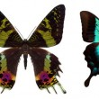 Many different beautiful butterflies — Stock Photo