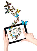Butterfly flying out from tablet computer — Stock Photo