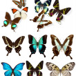 Many different beautiful butterflies — Stockfoto
