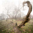 Scary photo of a tree — Stock Photo