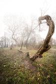 Scary photo of a tree — Stock Photo