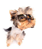 Hund mit schattierungen — Stockfoto