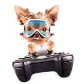 Uroczy szczeniak grać na gamepada — Zdjęcie stockowe