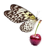 Sweet cherry and beautiful butterfly — Stock Photo