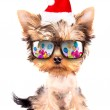 Christmas dog as santa with party glasses — Stock Photo