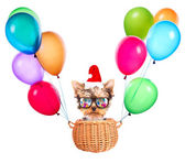 Christmas dog as santa with balloons — Stock Photo
