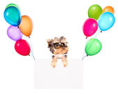 Holiday banners with balloons and dog — Stock Photo
