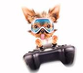Sevimli köpek yavrusu oynamak oyun tablası — Stok fotoğraf