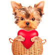 Valentine dog  in a basket with red heart — Stock Photo #37746717