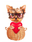 Valentine dog in a basket with red heart — Stock Photo