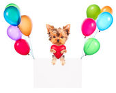 Holiday banners with balloons and dog holding heart — Stock Photo