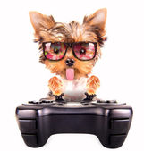 Charming Puppy play on game pad — Stock Photo