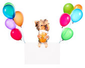 Holiday banners with balloons and dog hold beer — Zdjęcie stockowe