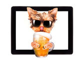 Dog on tablet computer with beer — Stock Photo