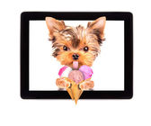 Dog licking with ice cream on tablet screen — Stock Photo