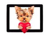 Dog holding heart with tablet computer — Foto de Stock