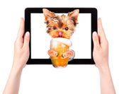 Dog on tablet computer with beer — Stockfoto