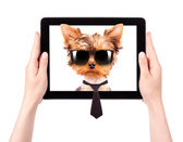 Business dog on a digital tablet screen — 图库照片