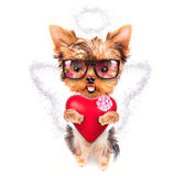 Lover valentine puppy dog with a red heart — Zdjęcie stockowe