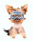 Dog with ski mask — Stock Photo