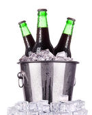Beer bottles in ice bucket isolated — ストック写真