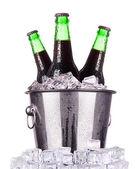Garrafas de cerveja no balde de gelo isolado — Foto Stock