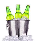 在被隔绝的冰桶啤酒瓶 — 图库照片