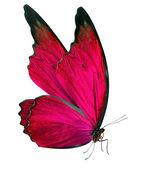 Linda borboleta isolada no branco — Fotografia Stock