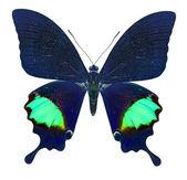 Prachtige vlinder geïsoleerd op wit — Stockfoto
