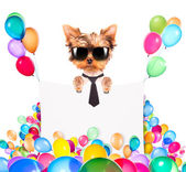 Dog with Holiday banner and colorful balloons — Stockfoto