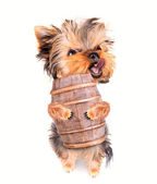 Oktoberfest dog with beer barrel — Stock Photo