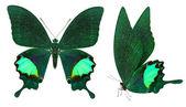 Красивая бабочка, изолированные на белом фоне — Стоковое фото