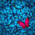 Beautiful butterfly background — Stock Photo #51061241