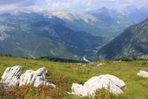 Alpine rhododendron landscape view, Julian Alps, Slovenia — Stock Photo