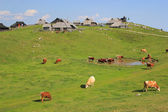 Alpine meadow pasture, Slovenia — Stock Photo