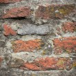 Stock Photo: Lichens on brick wall