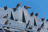 Pigeon's crap — Stock Photo