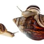 Постер, плакат: Parenting snail