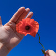 Holding a poppy — Stockfoto