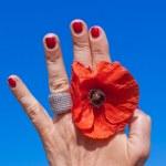 Jewel poppy — Stock Photo #22429295