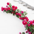Crawling roses - Stock Photo